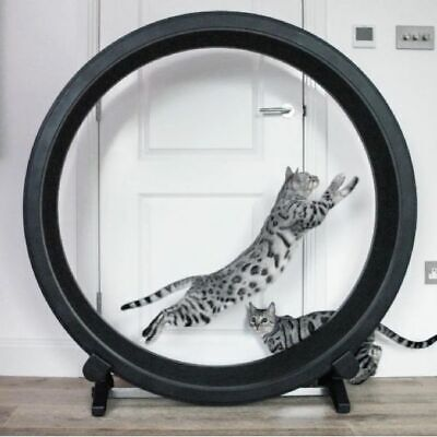 Cat Exercise Wheel Help Your Cat Expand Pent Up Energy Home Garden