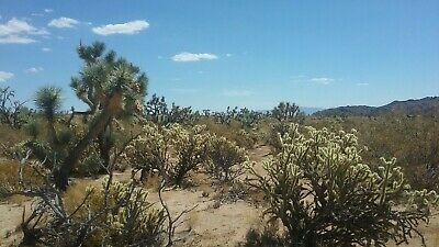 2.21 acres in Mohave county 2999 for monthly payments-Bid for down payment