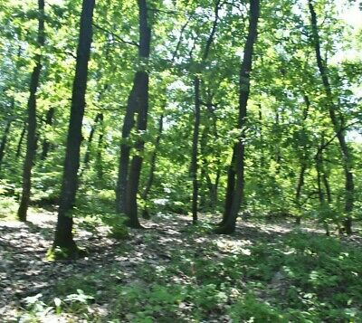 Huge Forest Plot N. Bulgaria property Bulgarian properties 4 log cab house EU