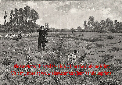 Dog Pointer English Grouse Hunting Pointing Hunter, Large 1890s Antique Print