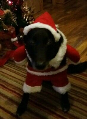 Small Dog / Large cat Outfit Santa Suit new Christmas Free postage