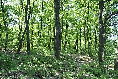 Freehold plot of Land Bulgarian Wood for sale Forest Bulgaria property house