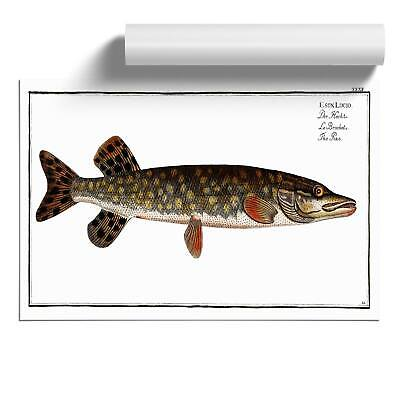Pike Fish Wall Art Poster Print Animal M.E. Bloch