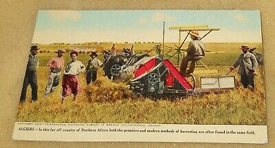 1920's International Harvester Northern Africa~Algiers~Colored Postcard