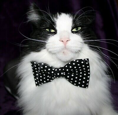 New Cat Small Dog Black White Dots Bow Tie & Breakaway Faux Leather Collar