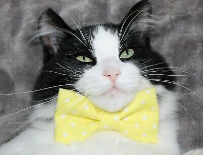 New Cat Yellow White Dots Cotton Bow Tie & Breakaway Faux Leather Collar