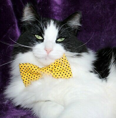 New Cat Gold Black Dots Cotton Bow Tie & Breakaway Faux Leather Collar