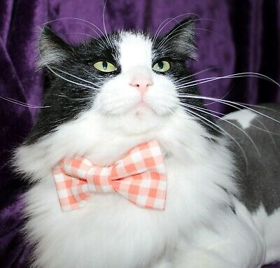 New Cat Coral & White Gingham Cotton Bow Tie & Breakaway Faux Leather Collar