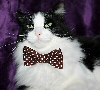 New Cat Brown & White Dots Cotton Bow Tie & Breakaway Faux Leather Collar