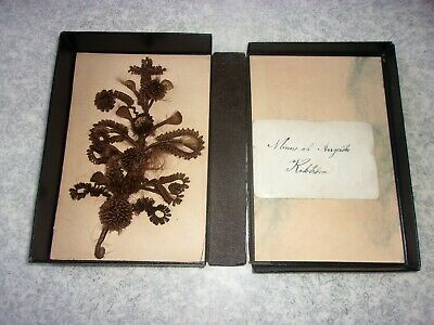 Victorian Memorial Hair Wreath Mourning with Card Original Box Sweden
