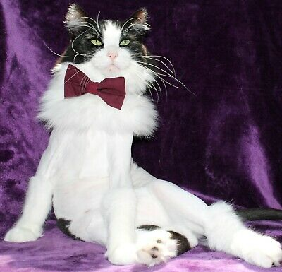 New Cat Eggplant Purple Bow Tie & Breakaway Faux Leather Collar For Cat