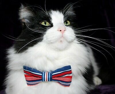 New Cat Red White Blue Cotton Bow Tie & Breakaway Faux Leather Collar Cat