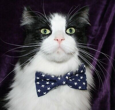 New Cat Navy & White Stars Cotton Bow Tie & Breakaway Faux Leather Collar
