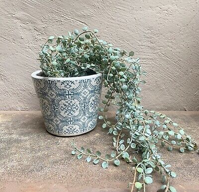 Peas Faux Trailing Houseplant Stem Matt Green Artificial String of Pearls