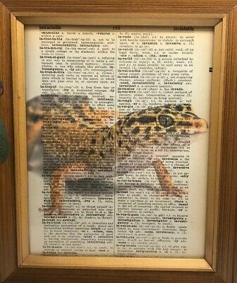 Vintage 1950s Dictionary Reptile Art Print  Collectible Leopard Gecko Picture