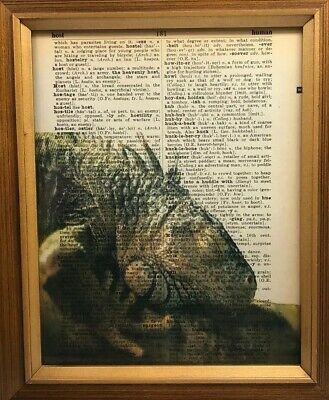 Vintage 1950s Dictionary Reptile Art Print  Collectible Sleeping Iguana Picture