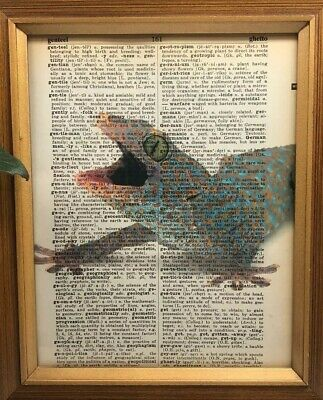 Vintage 1950s Dictionary Reptile Art Print  Collectible Tokay Gecko Picture