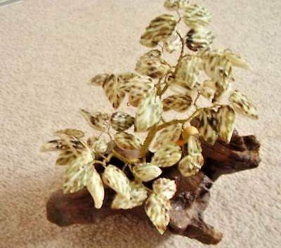 Chinese-Asian bonsai shell flower tree,natural shells