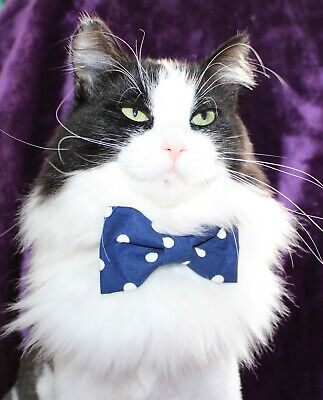 New Cat Navy & White Polka Dots Cotton Bow Tie & Breakaway Faux Leather Collar