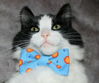 New Cat Small Dog Cheese Curds Cotton Bow Tie & Breakaway Faux Leather Collar