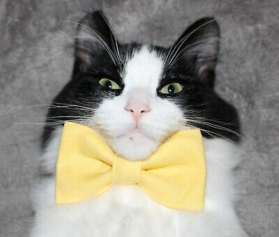 New Cat Small Dog Lemon Yellow Cotton Bow Tie & Breakaway Faux Leather Collar