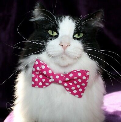 New Cat Pink & White Dots Cotton Bow Tie & Breakaway Faux Leather Collar