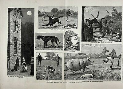 Comic Satire of Royal Hunting, Irish Setter Dog Pointer Dog, 1880s Antique Print