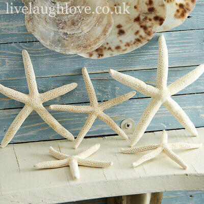 Set Of 5 Decorative Natural Starfish