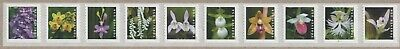 2020 Wild Orchids forever stamp mint coil strip of 10 with plate number B1111