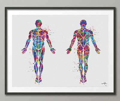 Muscular System Watercolor Print Human Body Anatomy Art Medical Art Doctor-1101