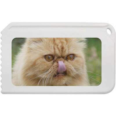 'Persian Cat' Plastic Ice Scraper (IC00006003)
