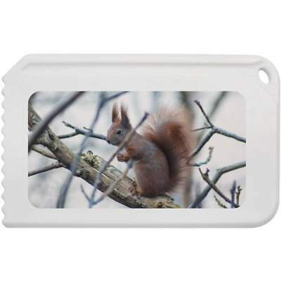 'Red Squirrel' Plastic Ice Scraper (IC00004727)