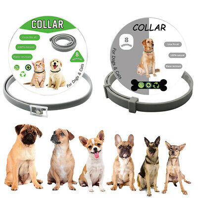 Pet Dog Adjustable Flea and Tick Collar Anti Insect Safety Pests Control PET