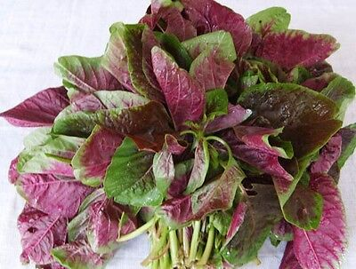 LEAF AMARANTH (chinese spinach) 400 seeds vegetable garden