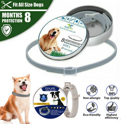 Adjustable Pet Anti Flea Tick Neck Collar for Dog Cat Kitten 8 Months Protection