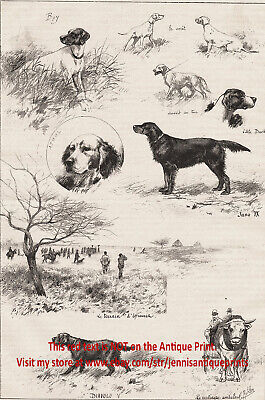 Dog Field Trial Hunting Champs, Flat-Coated Retriever Large 1890s Antique Print