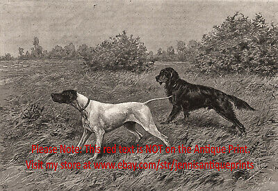 Dog Gordon Setter & English Pointer Named Champions, 1890s Antique Print