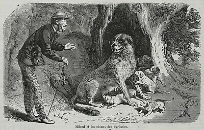 Dog Great Pyrenees Mother Guards Puppies RESCUE, 1870s Antique Engraving Print