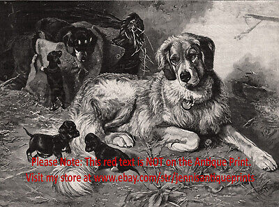 Dog Great Pyrenees Teased by Mischievous Dachshund Puppies, 1890s Antique Print