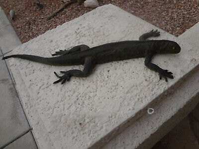 "Hard Rubber Lizard 24"" X 3"""