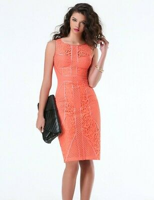 New! Bebe Paneled Lace Midi Pink Coral Size 8 classy cocktail pinup Dress $149