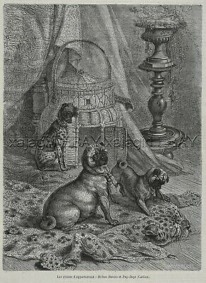 Dog Pug & Chinese Crested Attack Leopard Rug, Beautiful 1870s Antique Print