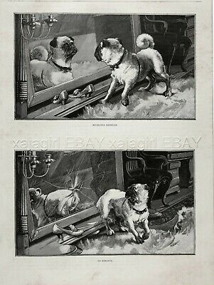 Dog Pug Naughty Puppy Fights Mirror & Breaks It! Pair of 1880s Antique Prints