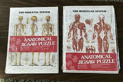 Vintage Anatomical Skeletal System & Muscular System Puzzles W/Chart Included 2