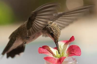 "2 HAND HELD / WINDOW HUMMINGBIRD FEEDERS Silk Flower on a 4 "" Tube* TOP QUALITY*"
