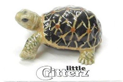 little Critterz Indian Star Tortoise LC309 (Buy 5 get 6th free!)