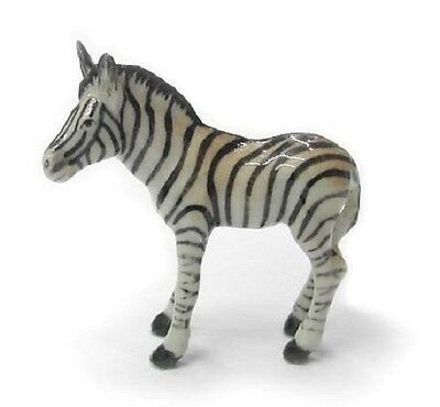 R113 - Northern Rose Miniature Zebra Baby