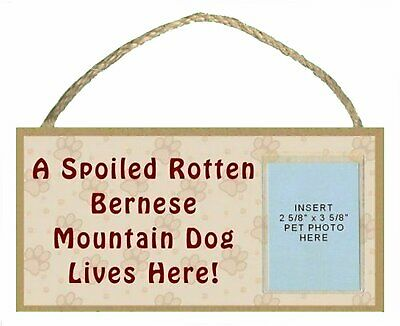 "Bernese Mountain Dog 10""x5"" Spoiled Rotten Sign w/ Insert for your Dog's Picture"