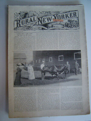 The RURAL NEW YORKER - A Journal For The Suburban & Country Home - Nov. 8, 1913