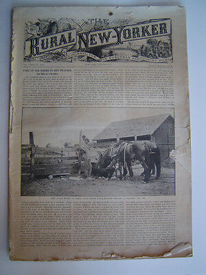 The RURAL NEW YORKER - A Journal For The Suburban & Country Home - Jul. 19, 1913